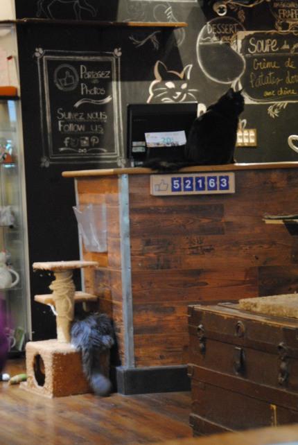 café chat l'heureux montréal