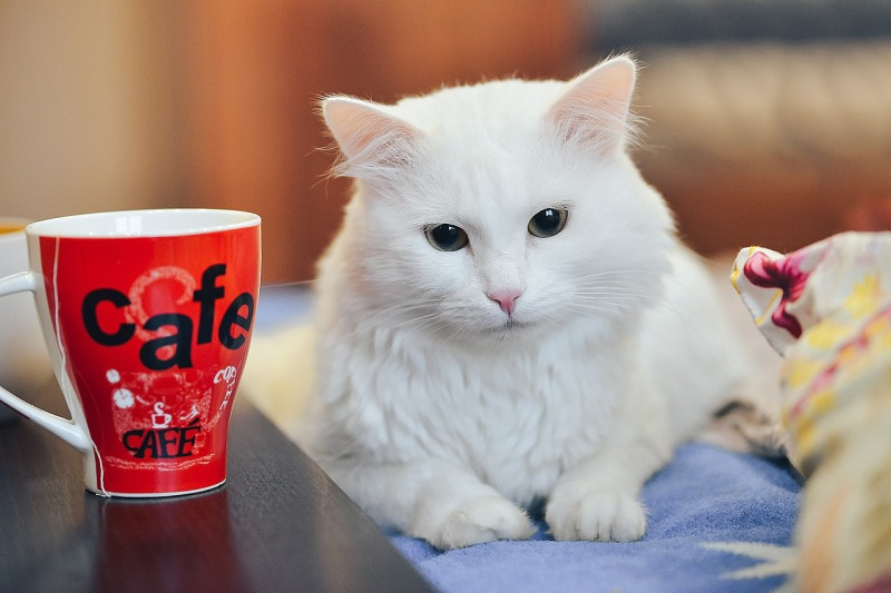 cat-drinking-tea-4597028_1280